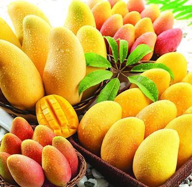 Contoh Peluang Usaha, Bisnis Buah Premium Ala Lily Mango